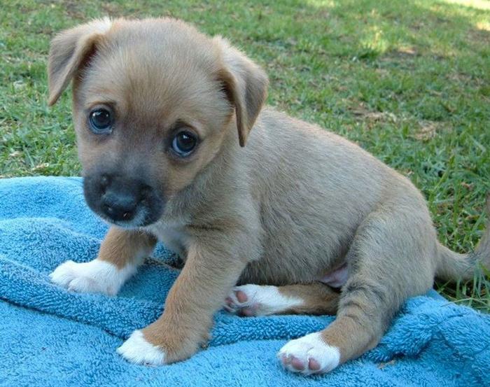 sad-puppy-6