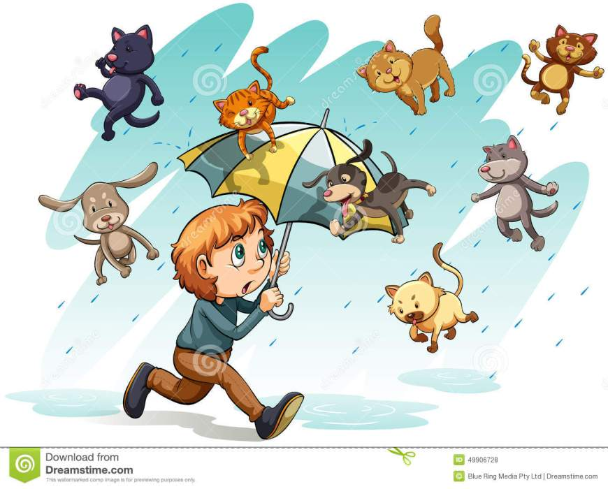 rain-cats-dogs-idiom-showing-white-background-49906728