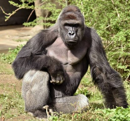 30xp-gorilla-master768